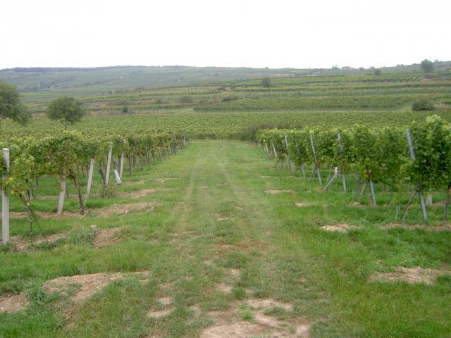 Kaufe Weingärten