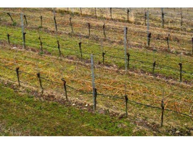 Suche Weingärten