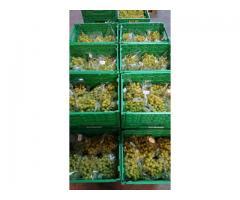 Weinviertler Tafeltrauben