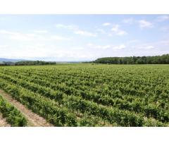 Weinkellerei in Langenlois