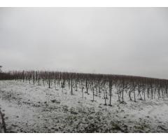 Weinberg Rebfläche in Lehrensteinsfeld zu verkaufen
