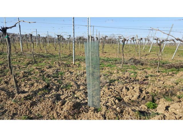 Rebschutznetze ClimaLight econom 220/80cm/grün/0.8