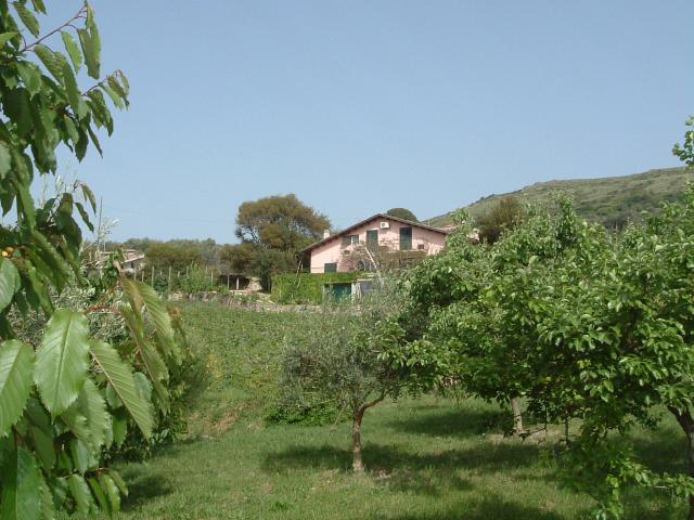 Weinberg, Landhaus, Bosa, Sardinien
