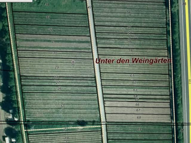 Weinberg in Reil/Mosel zu verkaufen